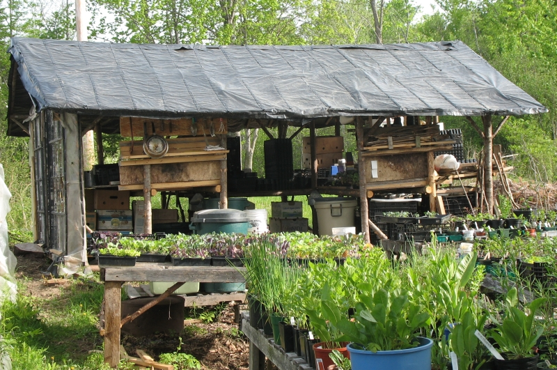 Outbuildings snakeroot organic farm for Farm shed ideas